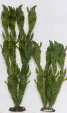 Растение Морской кактус, 40см, зеленое