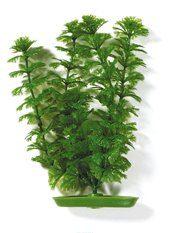 Растение Амбулия 13 см зеленое