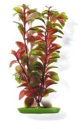Растение Людвигия 12,5 см красное