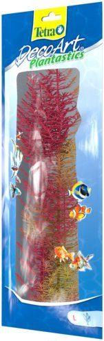 Растение Перистолистник красный L