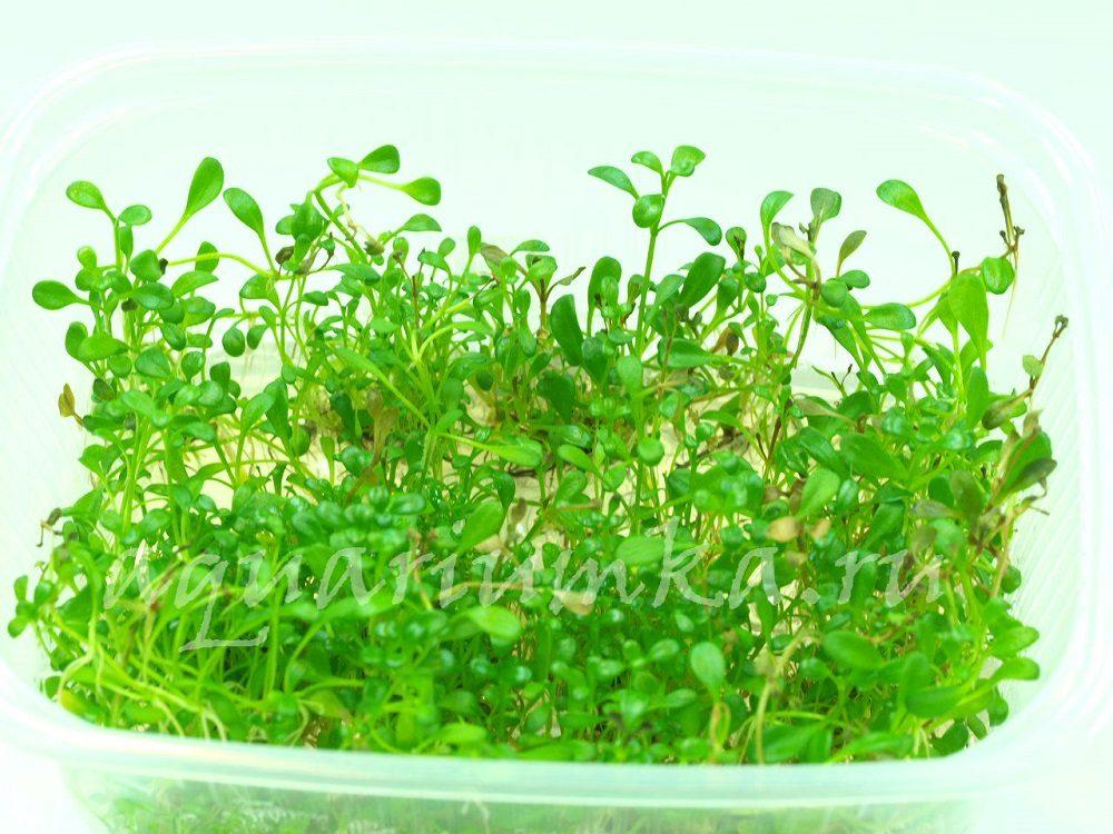 Растения в контейнере XL (только под заказ)