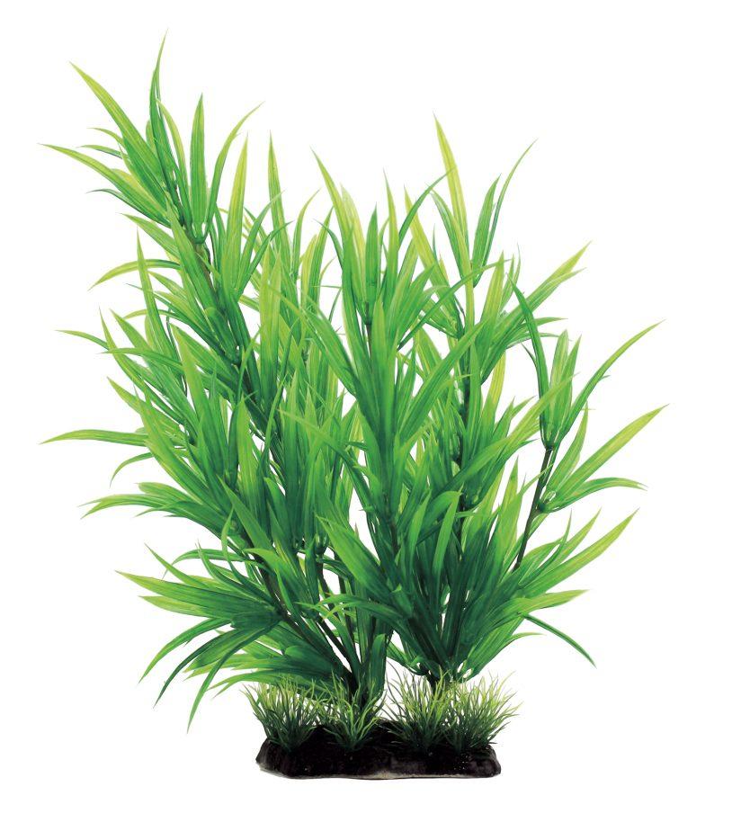 Растение Гетерантера 35 см, фото 2