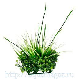 растение для аквариума Fluval Chi