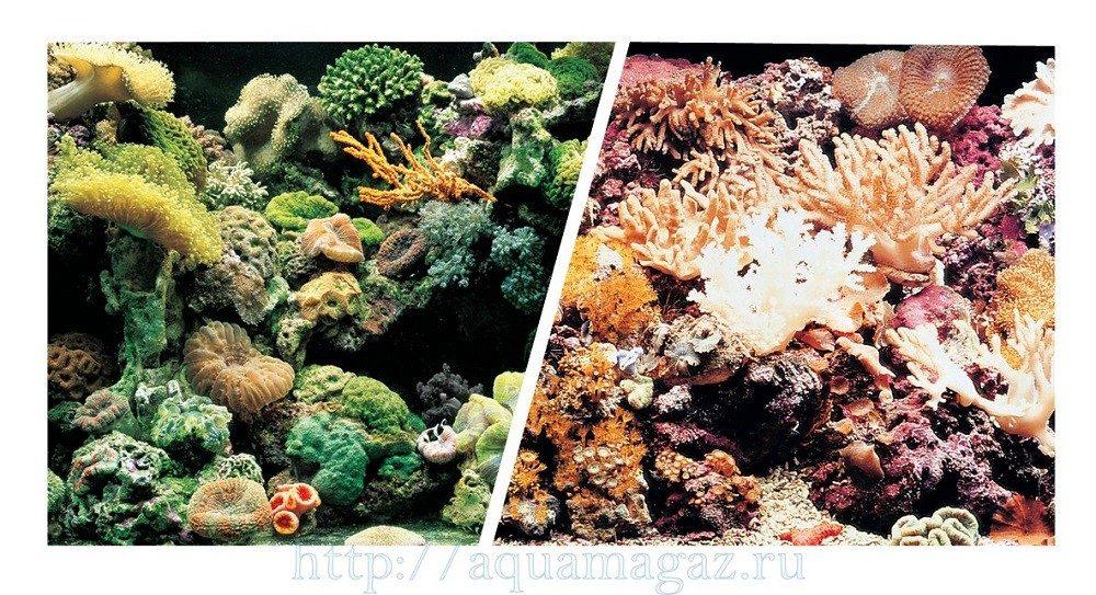 Фон Морской риф/Кораллы 45см 7,5 м