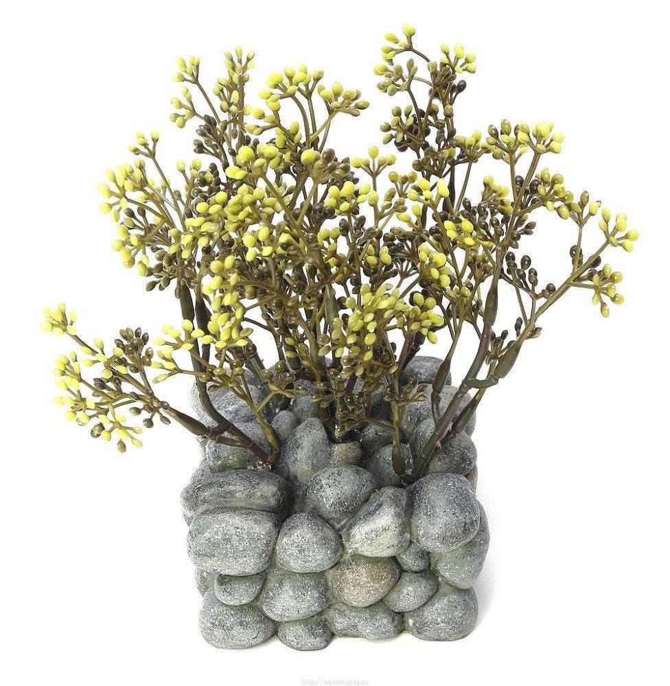 растение для аквариума Fluval Chi с креплением