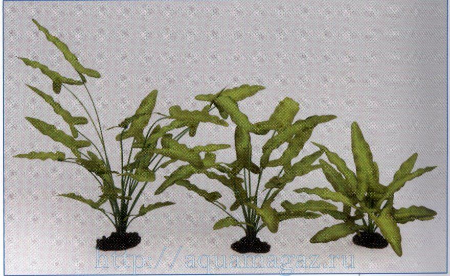 Растение Анубиас Хастифолия 40см шелковое