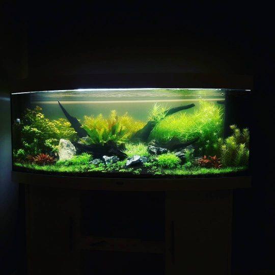 Оформление растительного аквариума (живые растения), фото 1