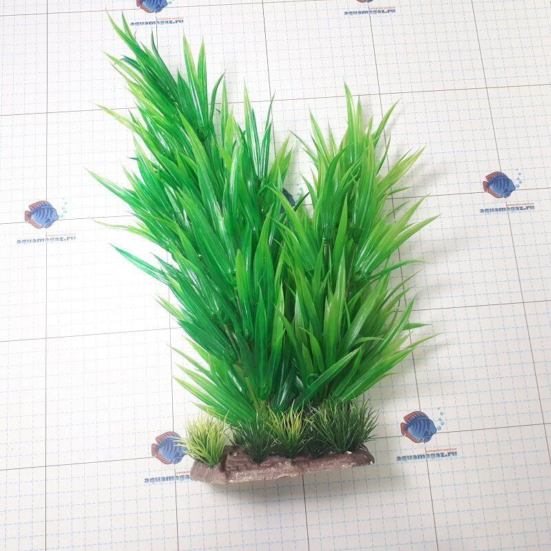 Растение Гетерантера 35 см, фото 1