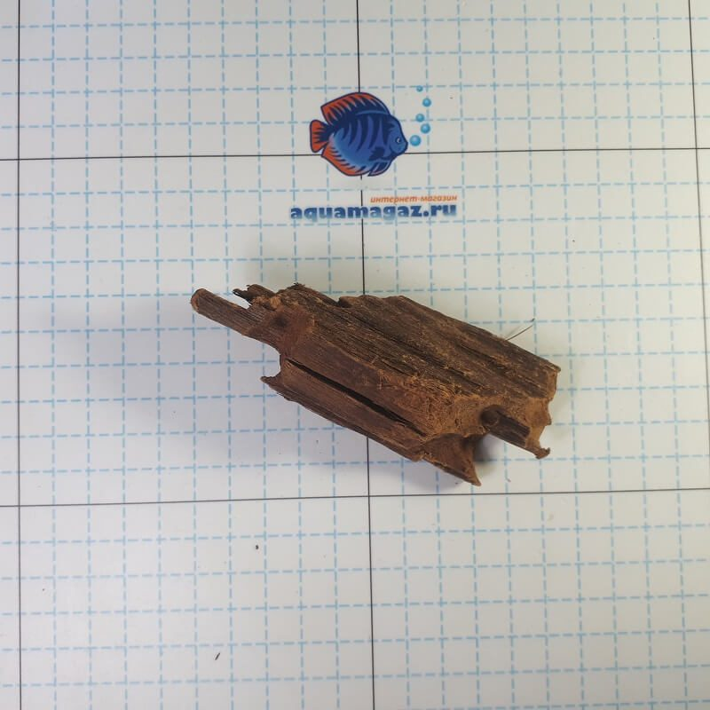 Коряга мангровая XS 6-10 см, фото 4