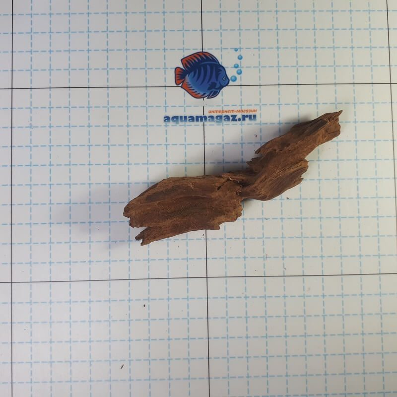 Коряга мангровая XS 6-10 см, фото 5
