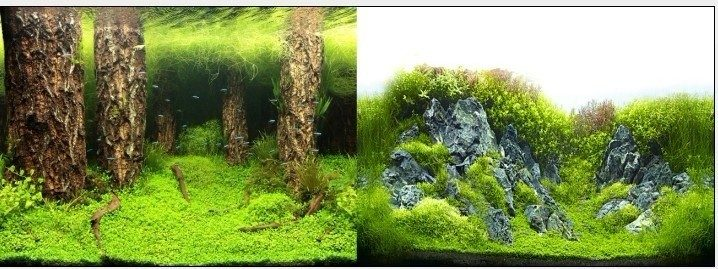 Фон двухсторонний 30см. Затопленный лес / Камни с растениями