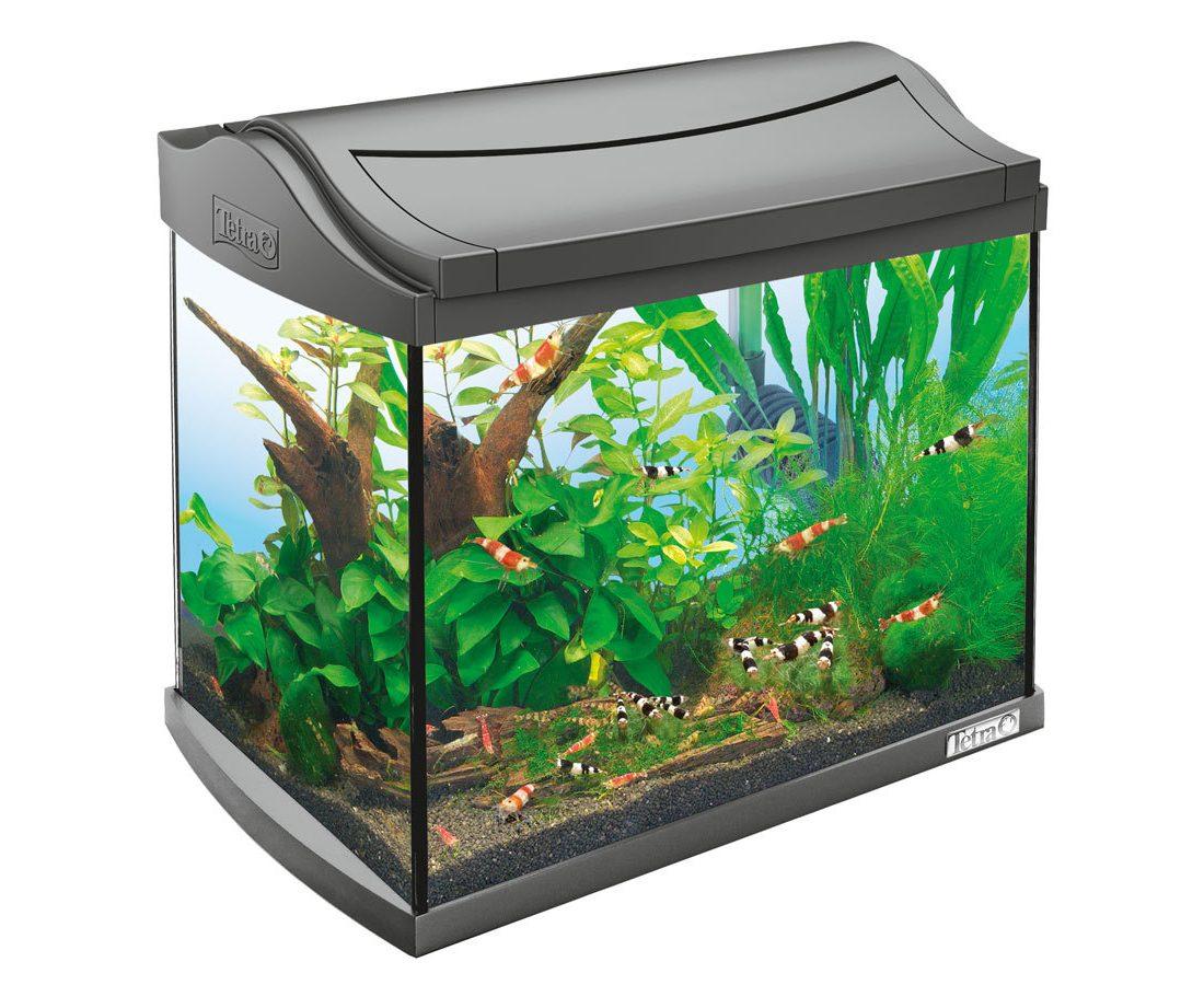 Маленькая картинка аквариума