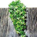 Искусственное подвесное растение для террариумов JBL TerraPlanta Congo Efeu, 12 см