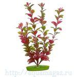Растение Людвигия 38 см красное