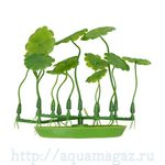 Растение Марсилея 10 см зеленое