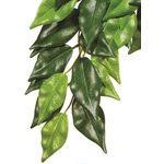 Тропическое растение Jungle Plants Фикус малое