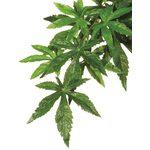 Тропическое растение Jungle Plants Абутилон малое