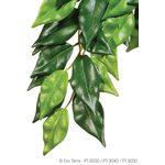 Тропическое растение Jungle Plants Фикус среднее