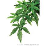 Тропическое растение Jungle Plants Абутилон  большое