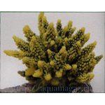 Коралл пластиковый желто-зеленый 11,5x10x9см
