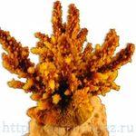 Коралл искуственный RED SEA Акропора (Acropora) L желтый