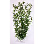 Растение Гигрофила S