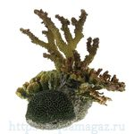 Коралл пластиковый LAY-OUT LIVE CORAL 360 x250 x300мм