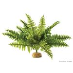 Растение Exo Terra Бостонский Папоротник средний