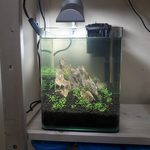 Нано аквариум 10 литров Dennerle (Дизайн/Оформление), фото 1