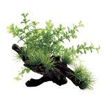 Растения на коряге Микрантемум 15x12x12 см, фото 1
