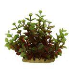 Растение Людвигия красно-зеленая 15 см, фото 1