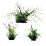Набор растений Валлиснерия Гигрофила перистонадрезанная Папоротник 15-35 см 3 шт Art Uniq, фото 1