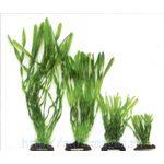Растение Валлиснерия спиральная, 40см, зеленое