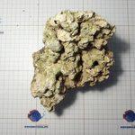 Сухой рифовый камень, фото 1