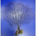 Коралл черный 10-15 (sea fun) 25-38см (5шт)