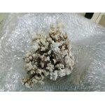 Коралл поциллопора  5-7 (coral flower) 13-18см