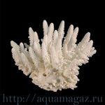 Коралл пальчиковый  10 (Finger) 26см