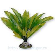 Растение Амазонка большое 32 см зеленое
