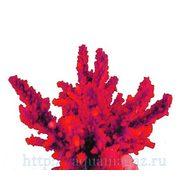 Коралл искуственный RED SEA Акропора (Acropora) L красный