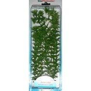 Растение Амбулия (Ambulia) 30см