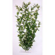Растение Гигрофила L