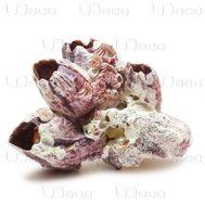 Морской жёлудь размер 5-10 см, упаковка 0,2 кг UDeco Barnacle