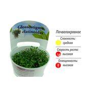 Глоссостигма повойничковая (Glossostigma elatinoides ) ARU-11713