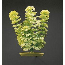 Растение Амбулия 30 см зеленое