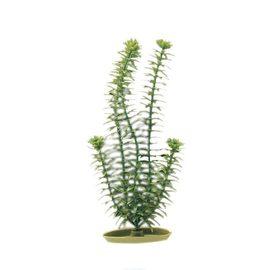 Растение Элодея 30 см зеленое