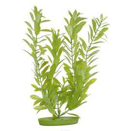Растение Гигрофила 30 см зеленое