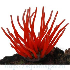 Коралл силиконовый красный 5.5х5.5х10см