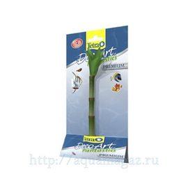 Растение Бамбук S