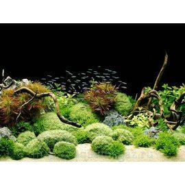 Фон Скалы/Растения 60х45см