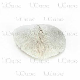 Коралл дисковидный UDeco Disk Coral M